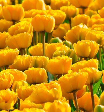 Sarı Rengin Olumlu Tarafları