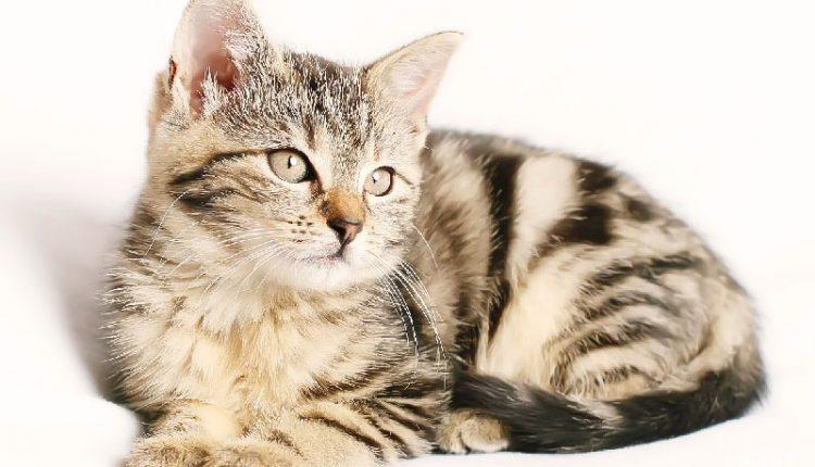 Kedi Fotoğrafları