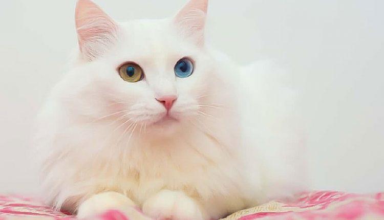 Kedi Bakımı Temizliği