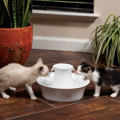 Kedi Su Kabı Temiz Olmalıdır