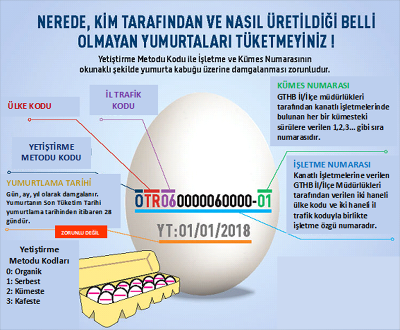 Yumurta Tavuk Yetiştirme Metodu Kodu