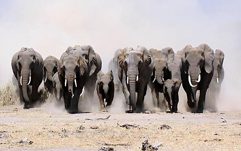 Filler Birlikte Yaşarlar