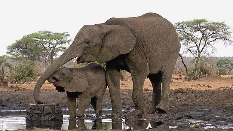 Filler çok iyi yüzerler