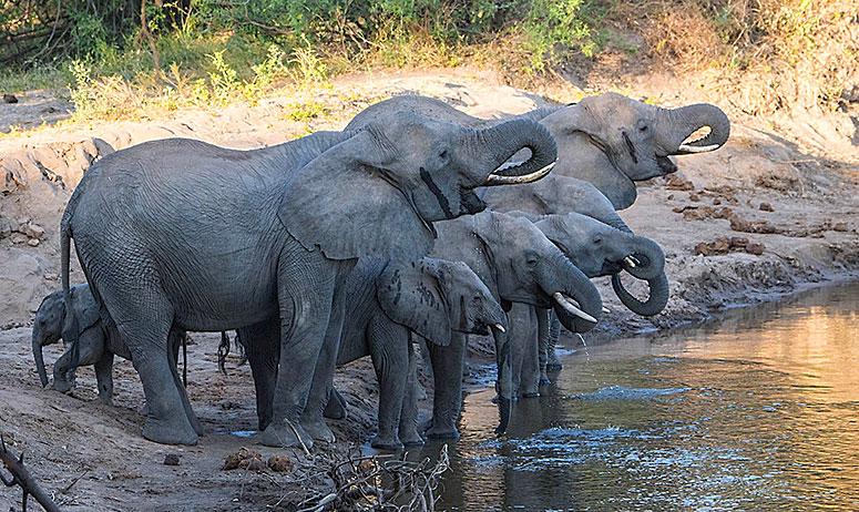 Filler Günde Ne Kadar Su İçer