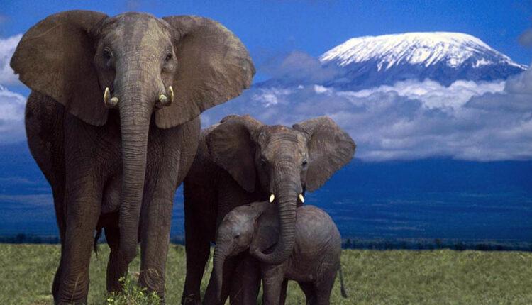 Filler merhametli koruyucudurlar
