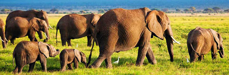 Filler Nasıl Hayvanlardır